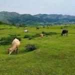 En el valle de Buelna…