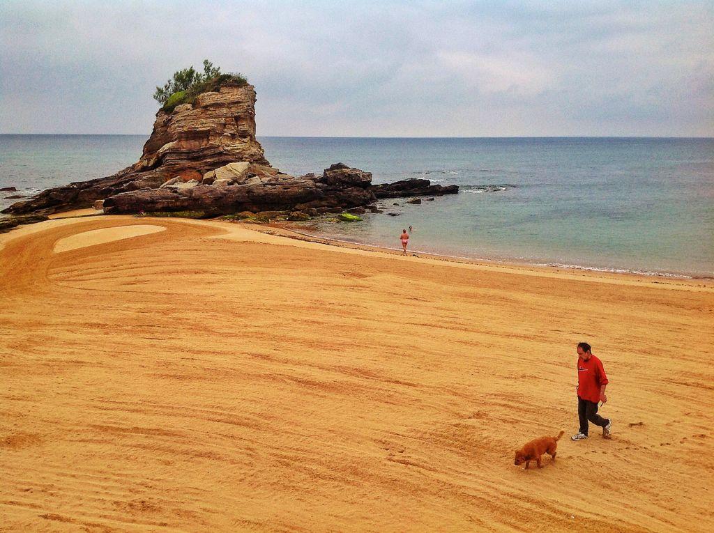 camello-playa-perro-santander