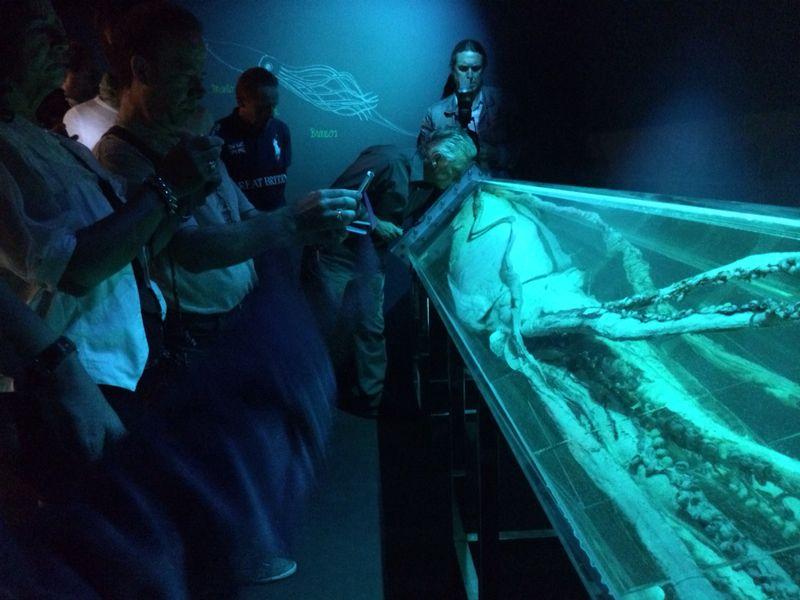 calamar-pechon-formol