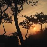 Amanece entre pinos. Estilo Mediterráneo