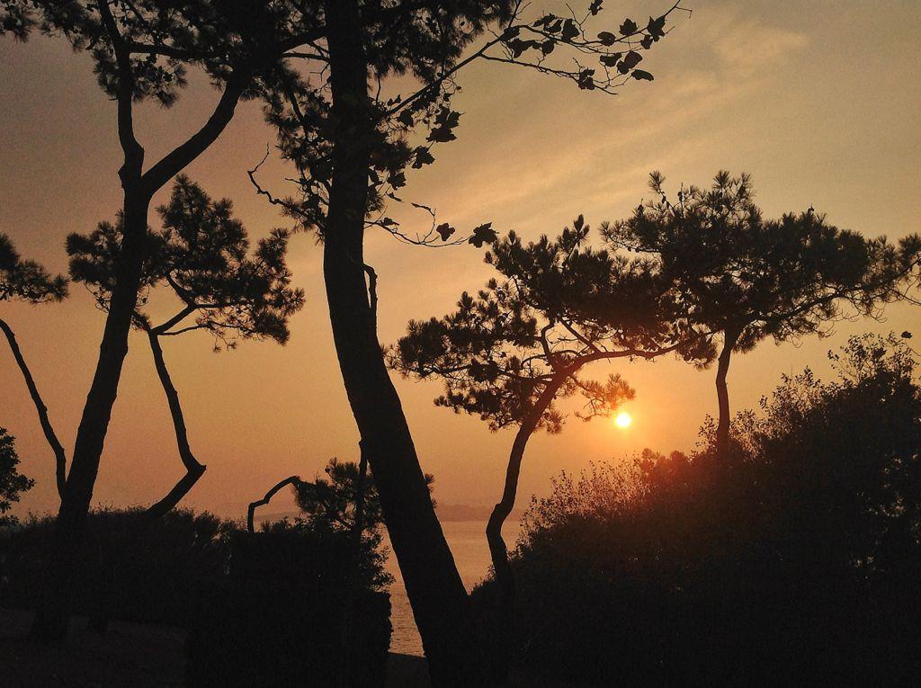 amanece-pinos-magdalena-santander