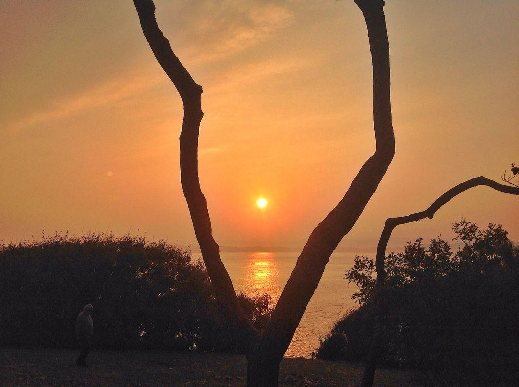 amanecer-arbol-santander