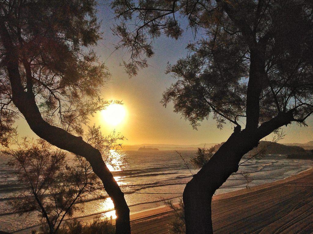arboles-sardinero-amanecer