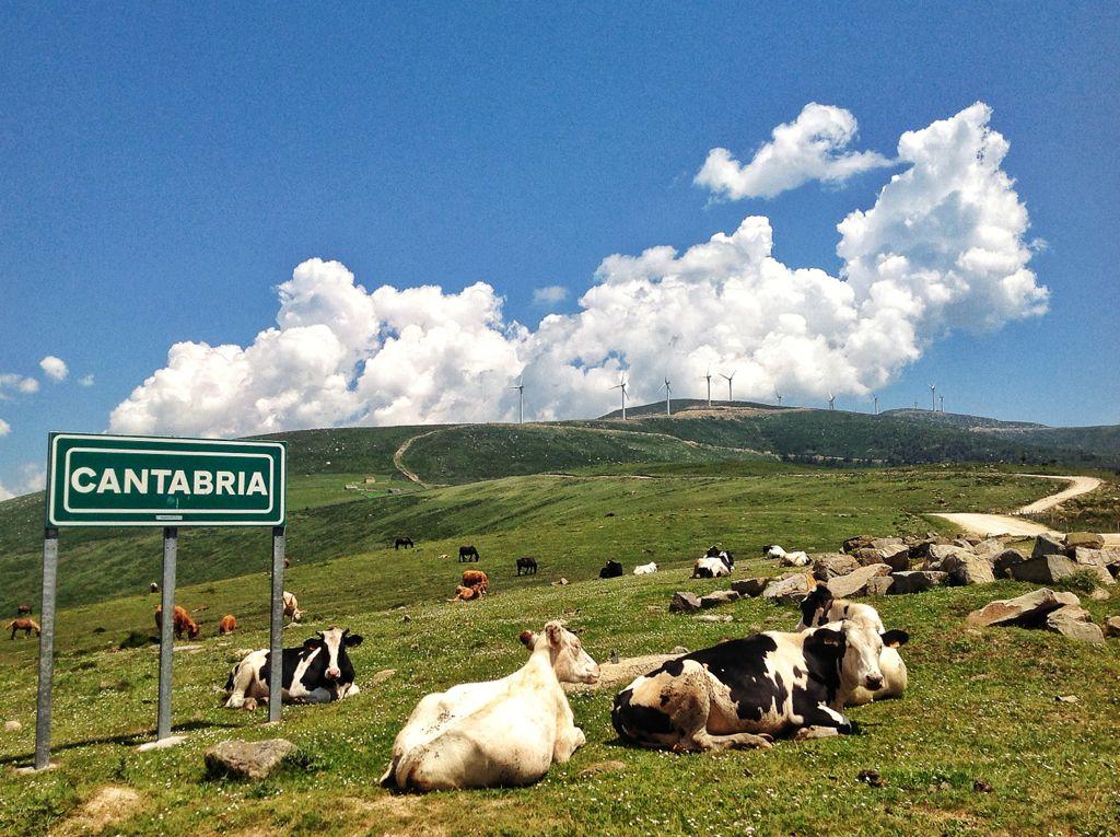 guardianas-vacas-cantabria