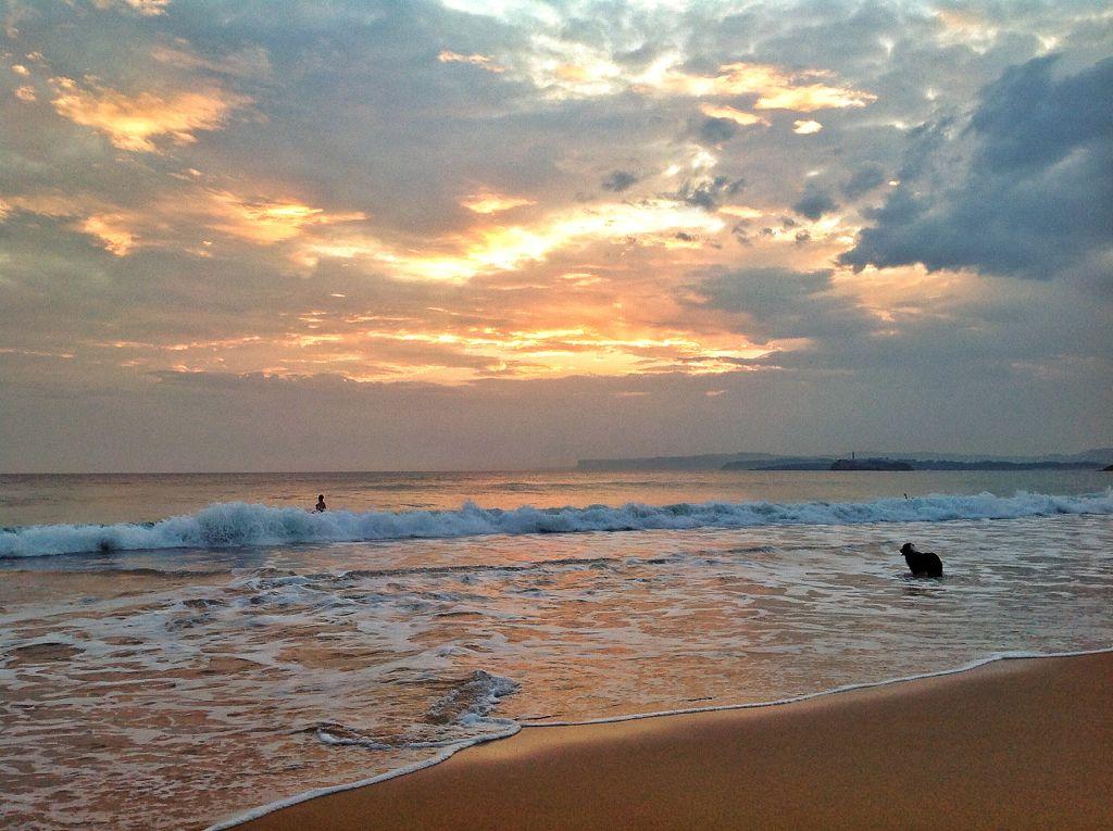perro-amo-cole-amanecer-sardinero