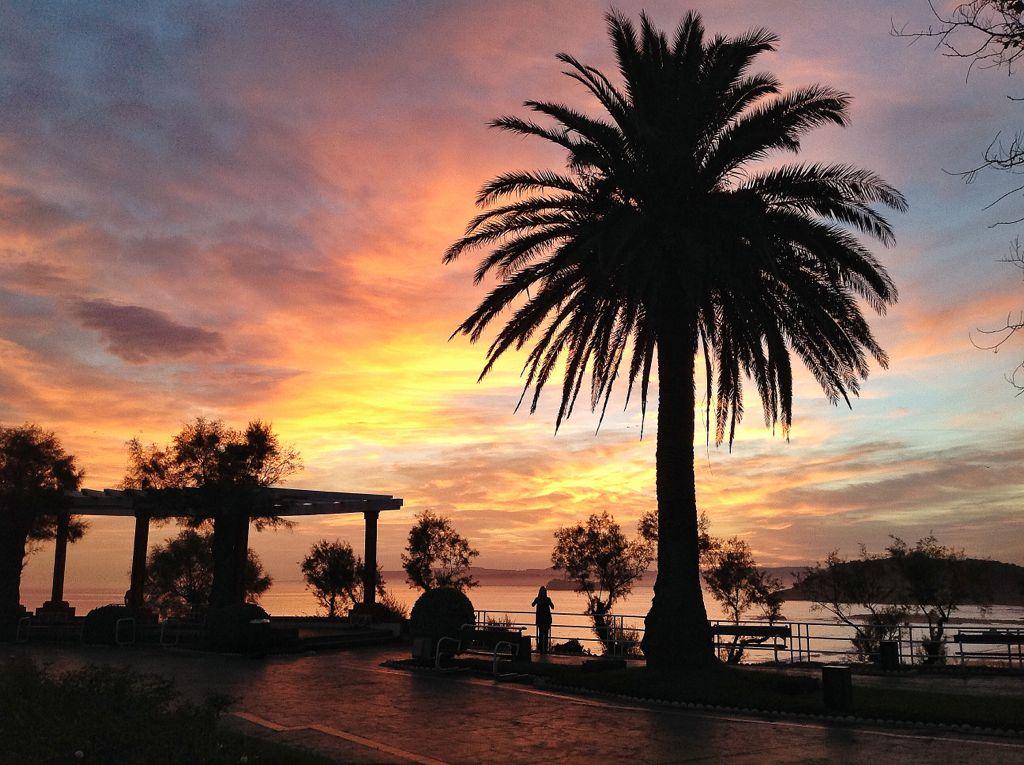 amanecer-piquio-palmera