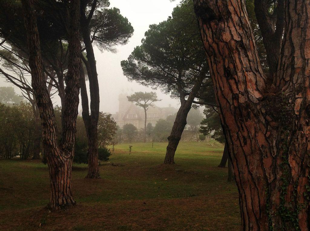 palacio-magdalena-niebla