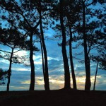 El bosque animado