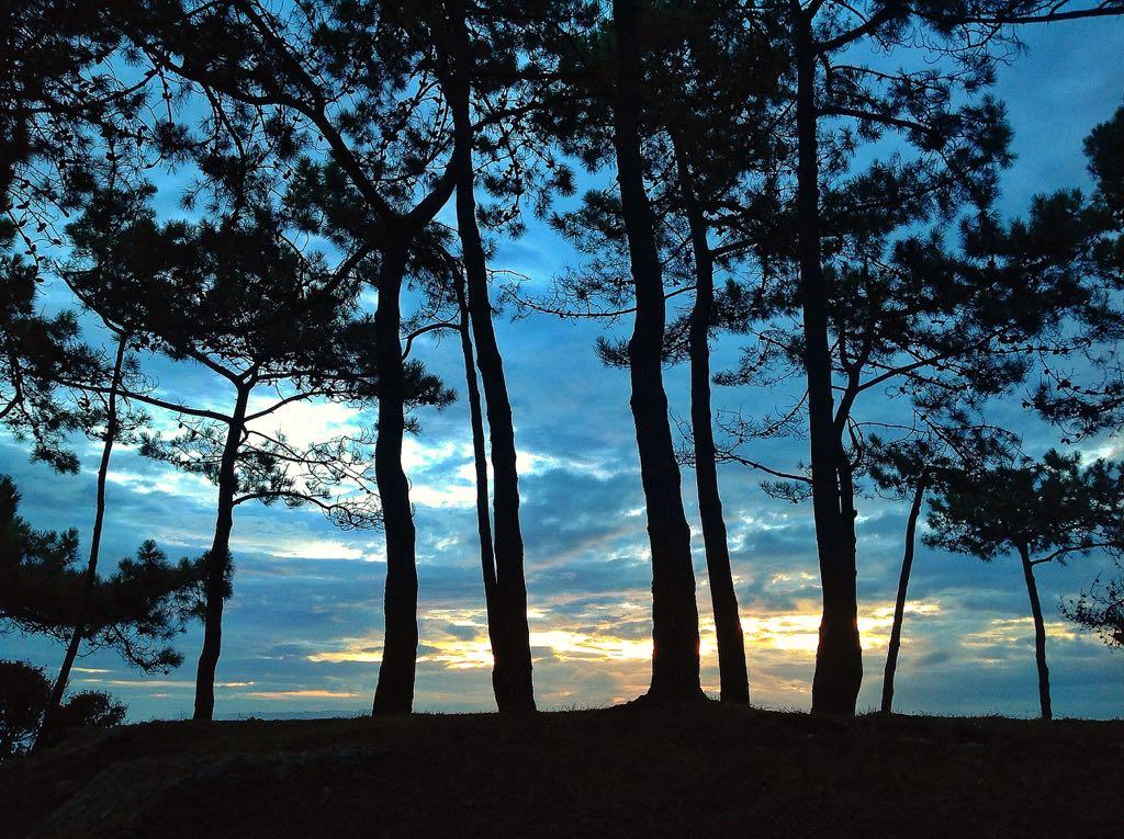 pinos-magdalena-santander