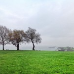 Hay árboles que se alimentan de salitre