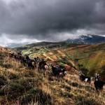 En el Monte Helgueron, Pandillo. Valles pasiegos.