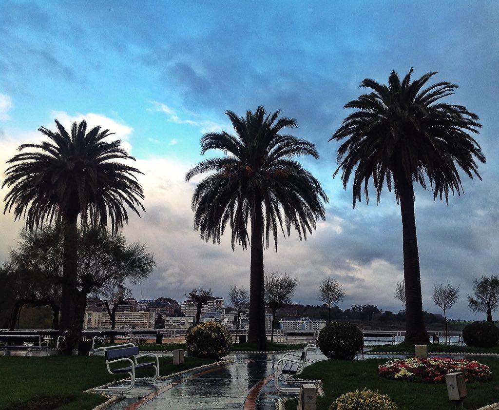 palmeras-nubarrones