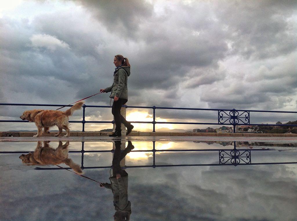 partida-doble-sardinero-perro