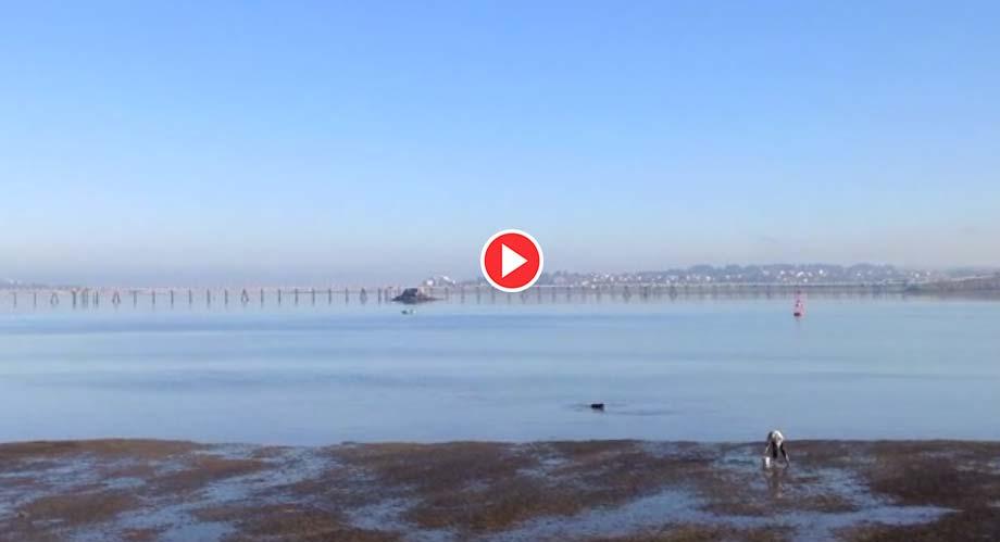 video-mariscar-raos