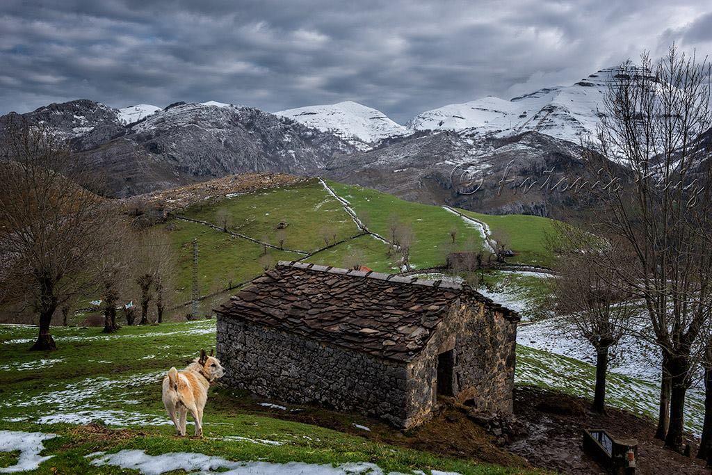 cabana-perro-montanas-miera-antonio-ruiz