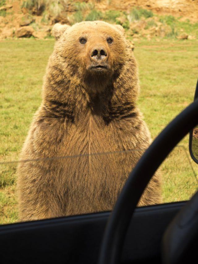 oso-cabarceno