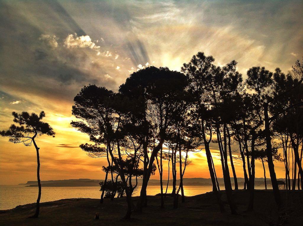 amanecer-pinos-magdalena-santander