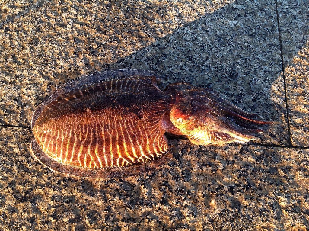 cachon-pesca-santander