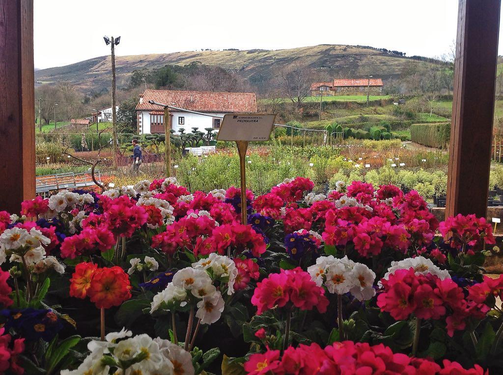 flores-primavera-mazcuerras