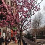 Buenos días primavera