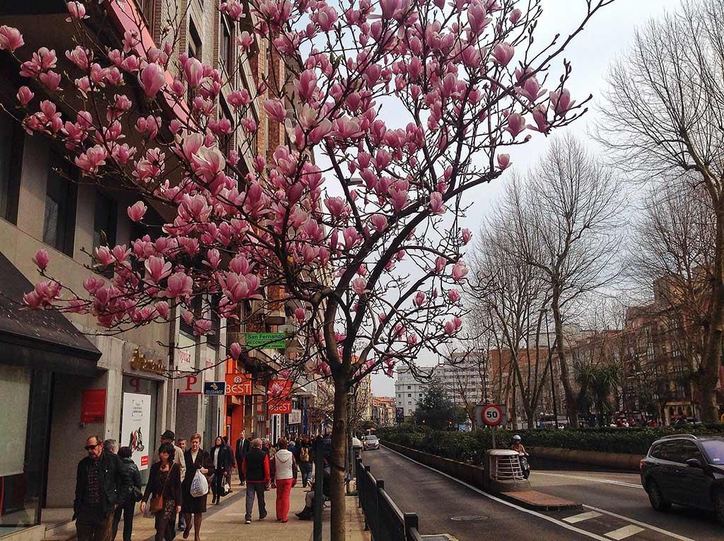 primavera-santander