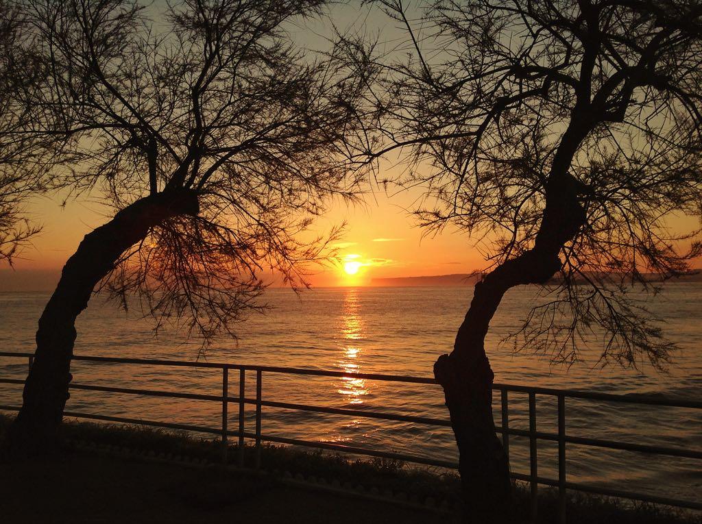 amanecer-arbol-piquio-santander