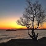 Árboles con vistas privilegiadas del amanecer