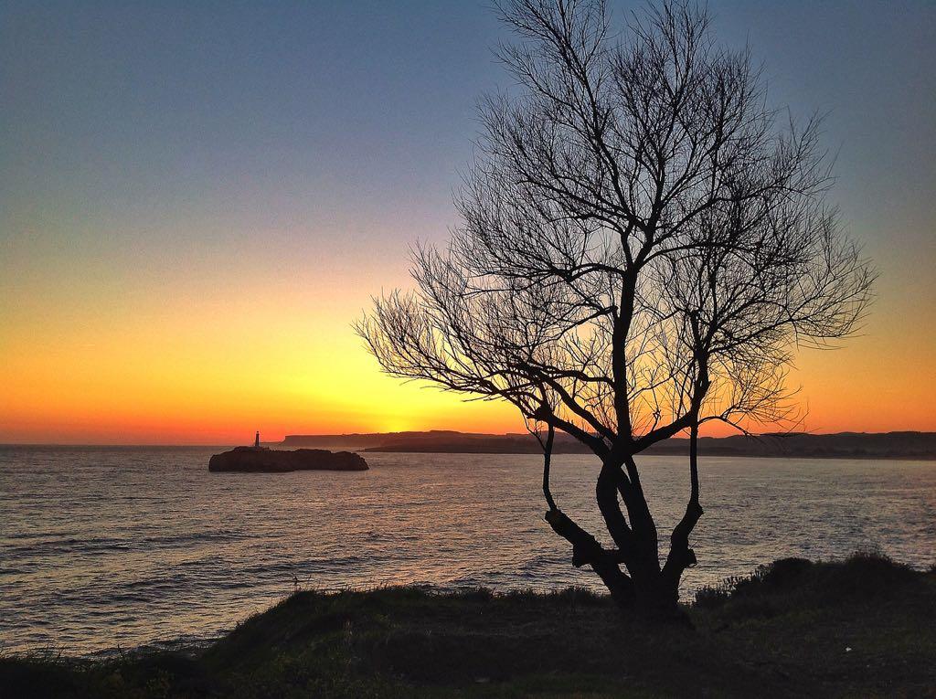 arbol-amanecer-isla-mouro