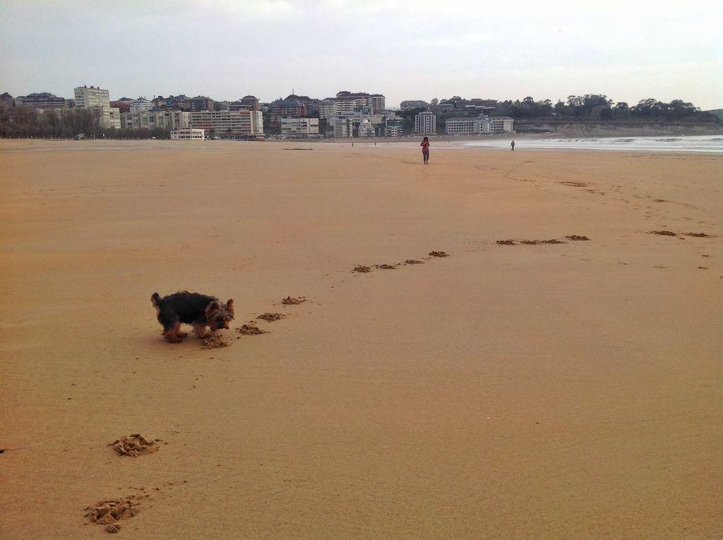 perro-playa-sardinero