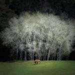 Acércate a lo salvaje en el Parque de la Naturaleza de Cabárceno