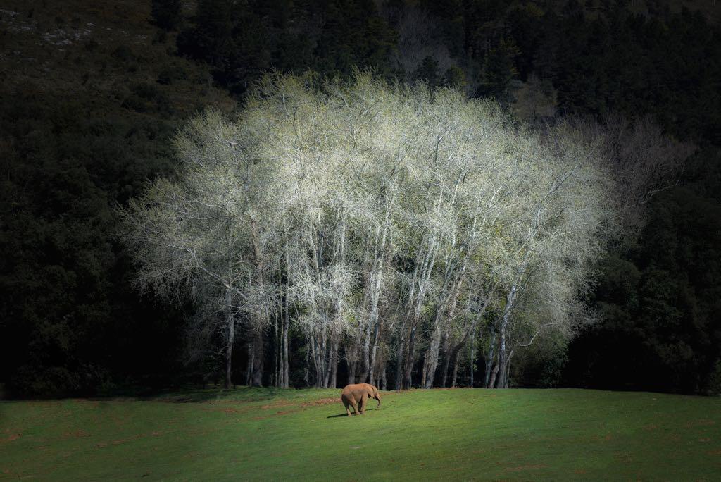 primavera-cabarceno
