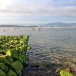 Disfrute de bahía. En chalupa, en paddle surf…