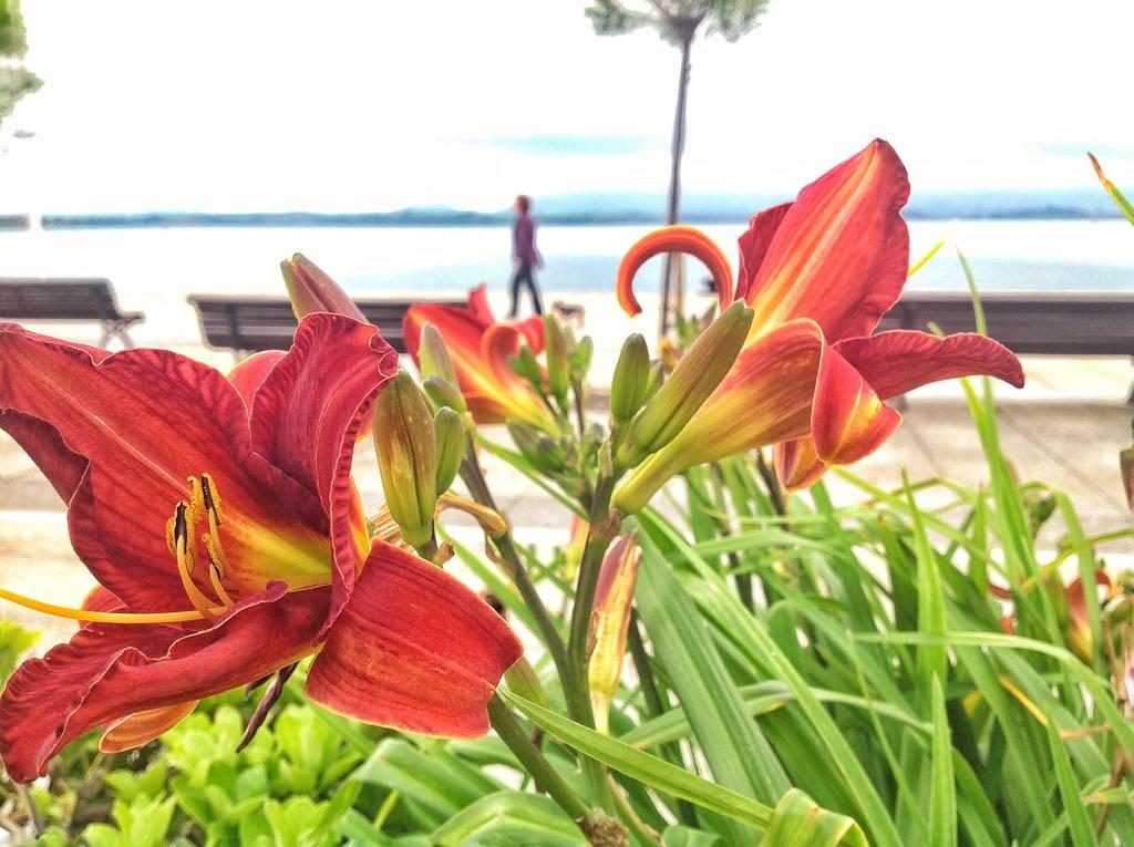 flores-bahia-santander-cantabria
