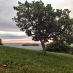 Mouro, al cobijo del árbol