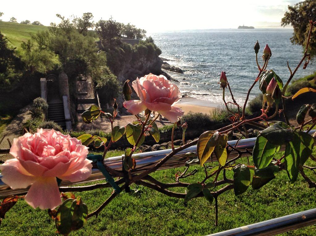 rosas-mataleñas-santander