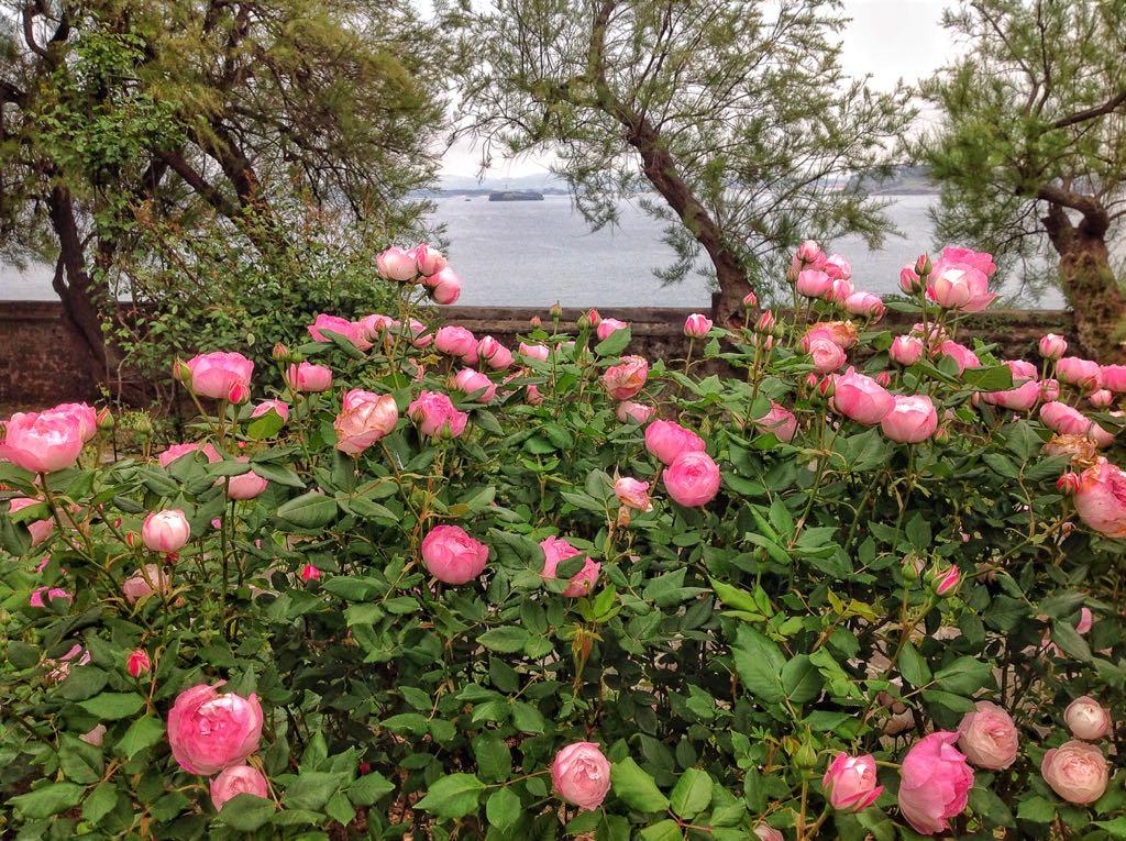 rosas-salitre-cantabrico