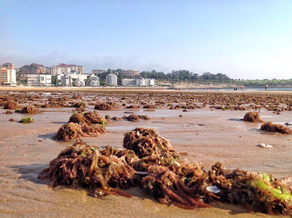 marea-sardinero-algas
