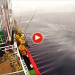 Pesca de bonito en el Cantabrico a bordo del San Roque Divino. Uno a uno. Impresionante