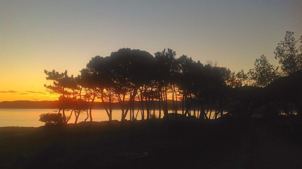 amanecer-pinos-magdalena