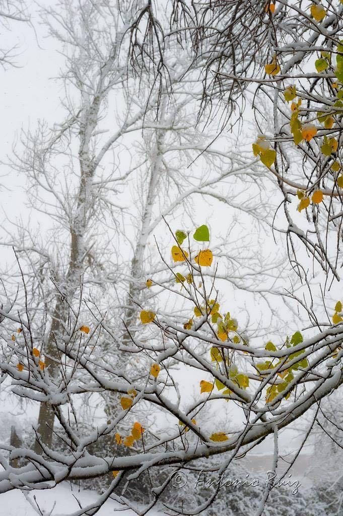nevada-otono-2015