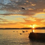 Las palomas celebran la salida del rey sol