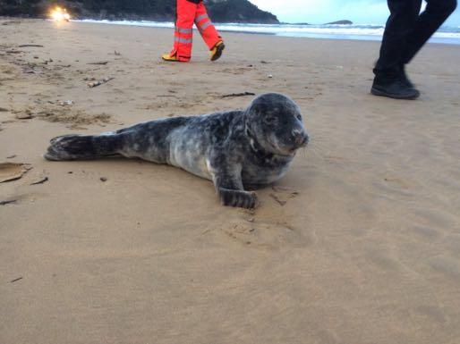 foca-castro