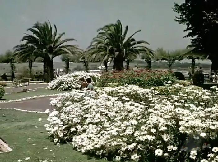 piquio-1958