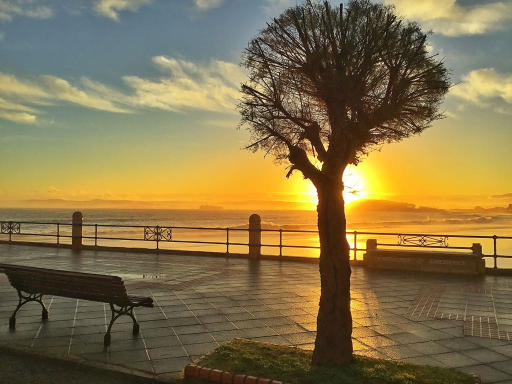 sol-arbol-amanecer-santander