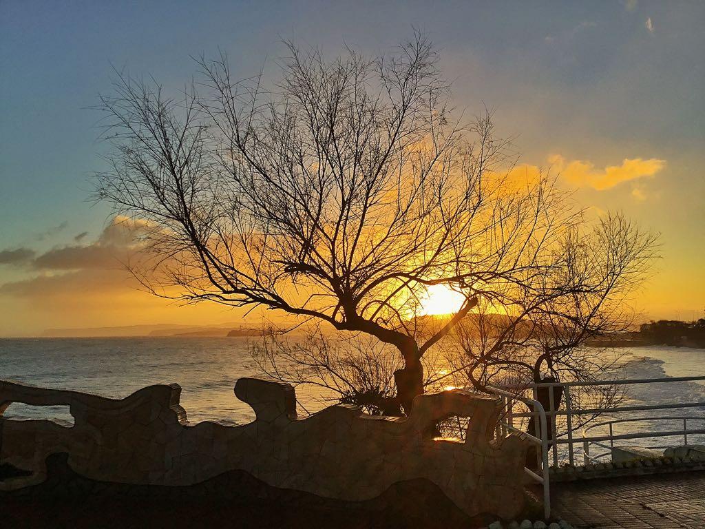 amanecer-piquio-arbol