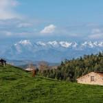 Los Picos de Europa desde Puerto Calderón. Cabaña, vaca y caballo