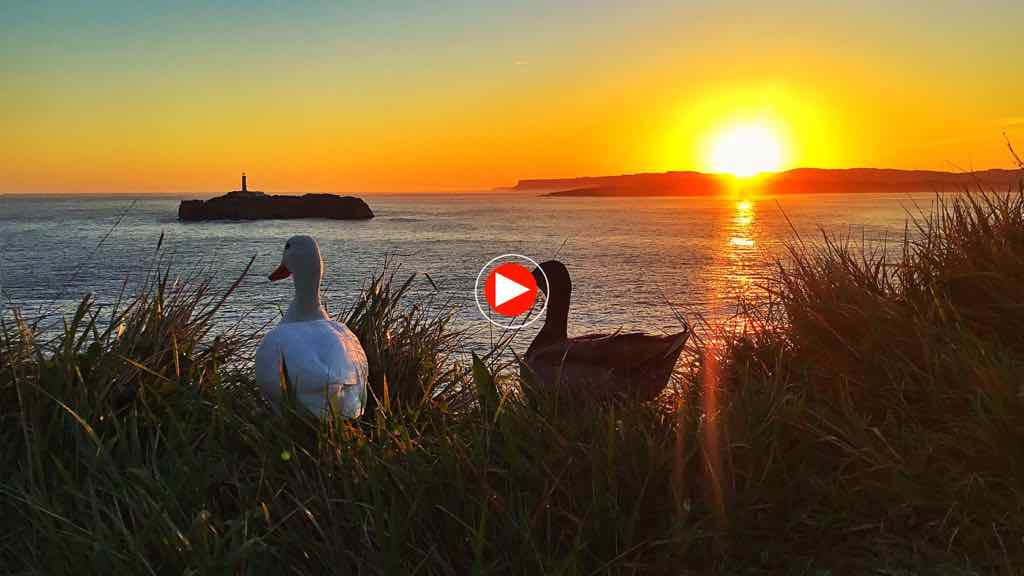 amanecer-patos-video