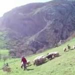 Heidi y Herminia, pastoras en los Picos de Europa de Cantabria