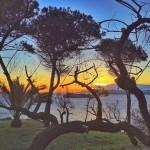 La isla de Mouro entre la arboleda al amanecer