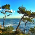 De la montaña a la mar. Cantabria en estado puro